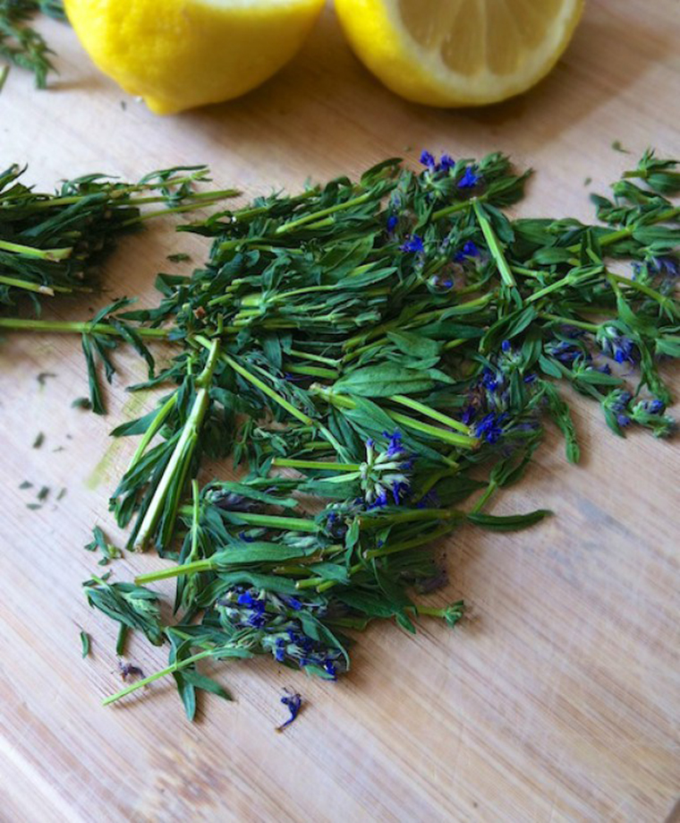 blue hyssop photo by teaspoon and spice